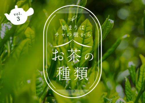 始まりはチャの木から お茶の種類